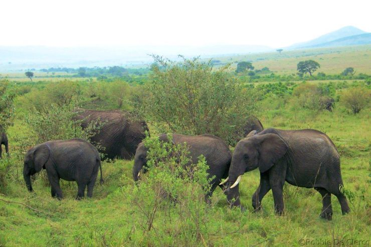 Masai Mara National Reserve (42)