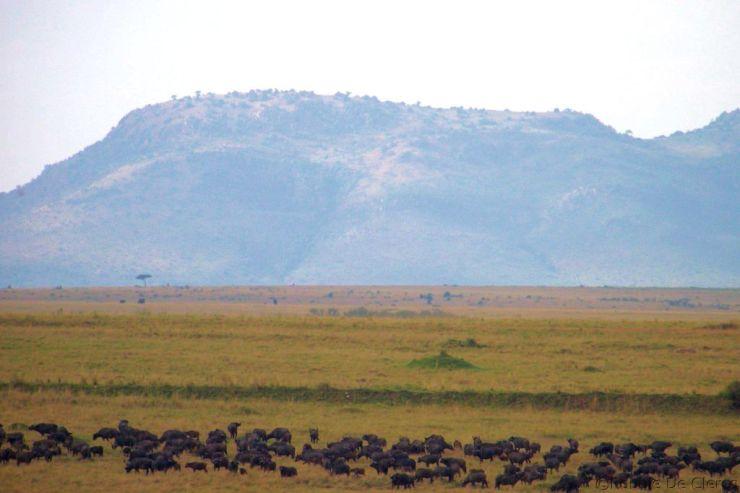 Masai Mara National Reserve (43)