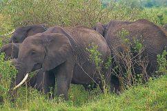 Masai Mara National Reserve (44)