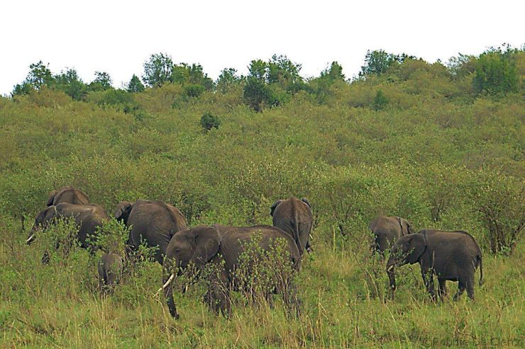 Masai Mara National Reserve (46)