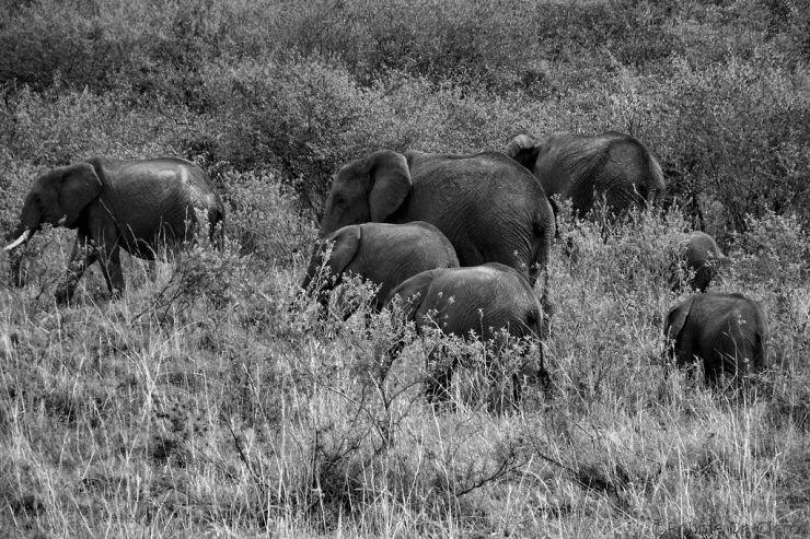 Masai Mara National Reserve (48)