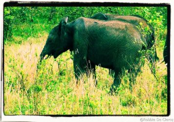 Masai Mara National Reserve (49)