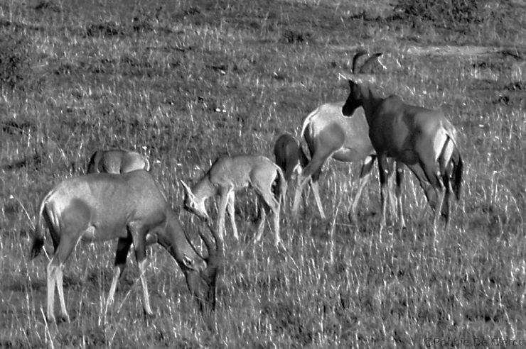 Masai Mara National Reserve (5)