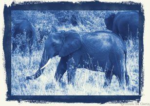 Masai Mara National Reserve (50)