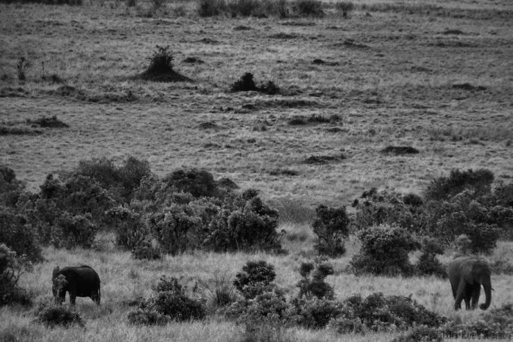 Masai Mara National Reserve (52)