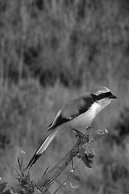 Masai Mara National Reserve (54)