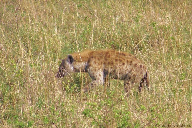 Masai Mara National Reserve (56)