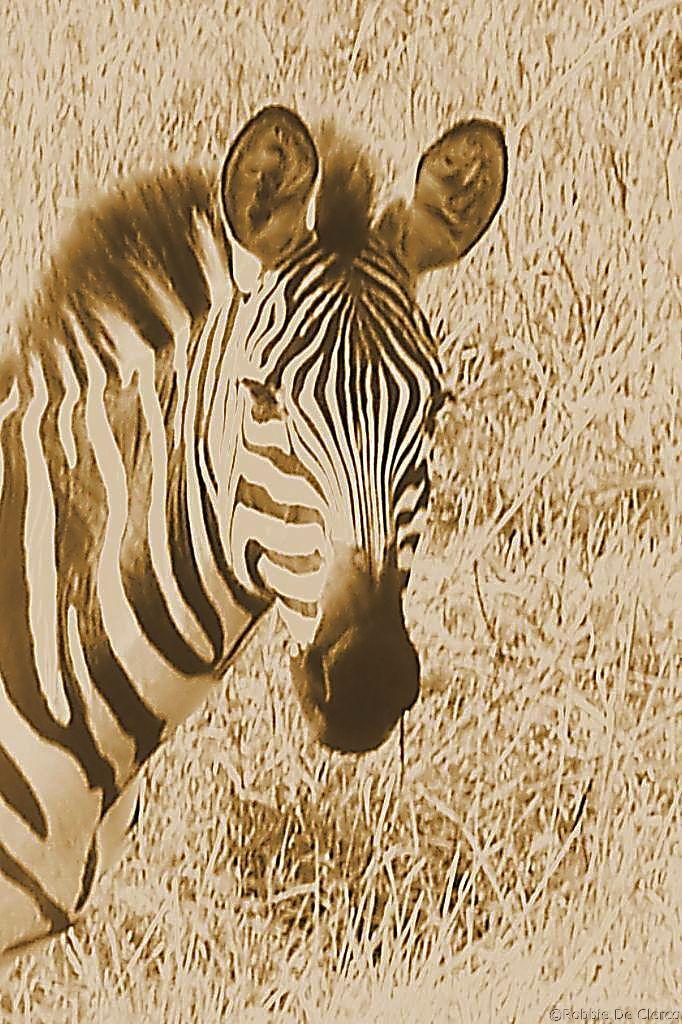 Masai Mara National Reserve (58)