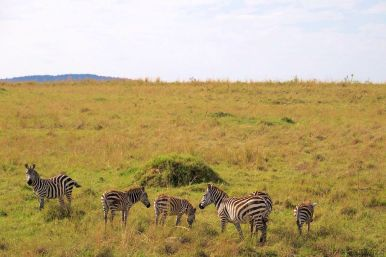 Masai Mara National Reserve (59)