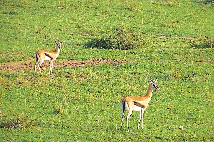Masai Mara National Reserve (6)