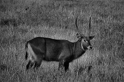 Masai Mara National Reserve (62)