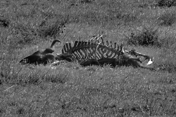 Masai Mara National Reserve (64)