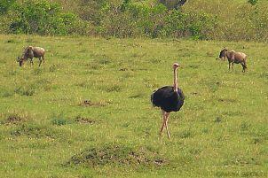 Masai Mara National Reserve (65)
