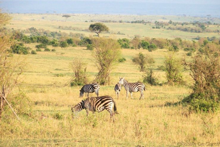 Masai Mara National Reserve (7)
