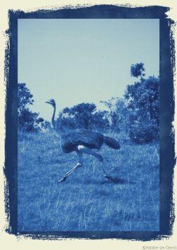 Masai Mara National Reserve (70)
