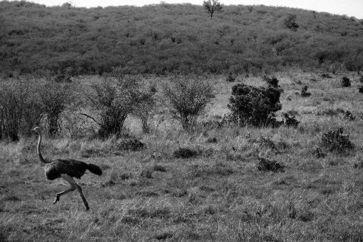 Masai Mara National Reserve (71)