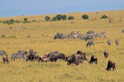 Masai Mara National Reserve (72)