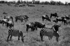 Masai Mara National Reserve (73)