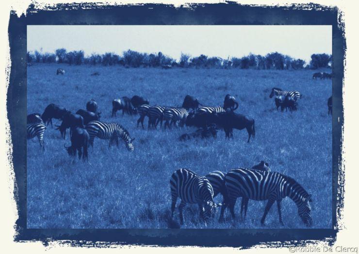 Masai Mara National Reserve (76)