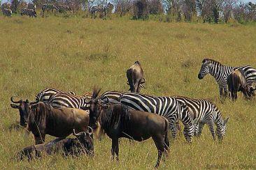 Masai Mara National Reserve (77)