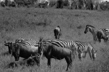 Masai Mara National Reserve (78)