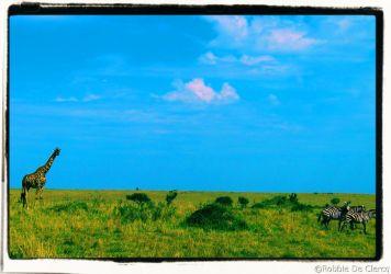 Masai Mara National Reserve (79)