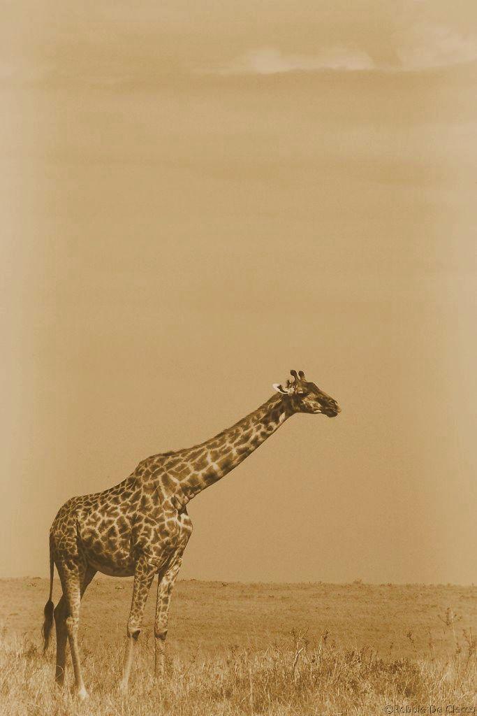 Masai Mara National Reserve (82)
