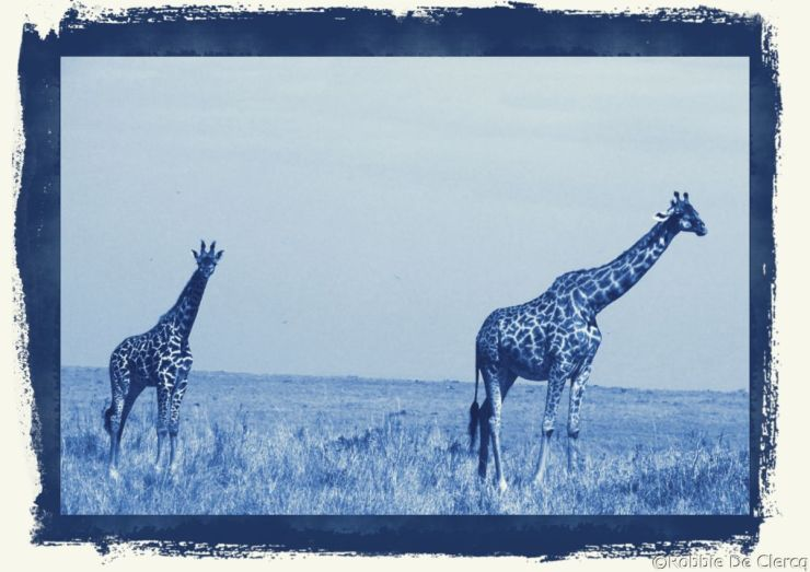 Masai Mara National Reserve (83)