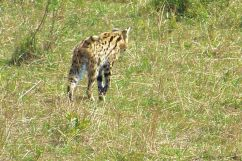 Masai Mara National Reserve (89)
