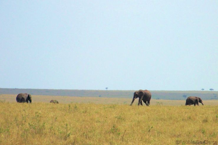 Masai Mara National Reserve (91)