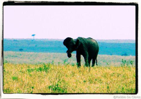 Masai Mara National Reserve (92)