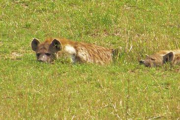 Masai Mara National Reserve (96)