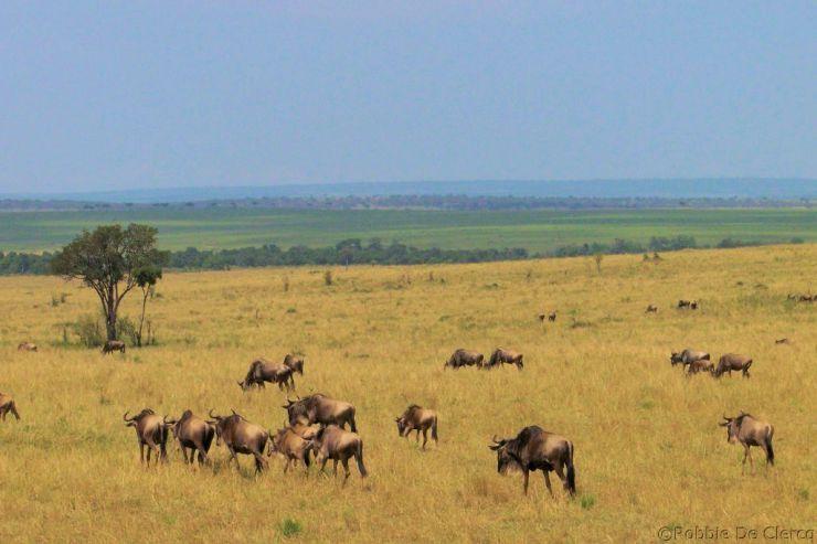 Masai Mara National Reserve (97)