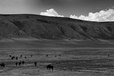 Ngorongoro (11)