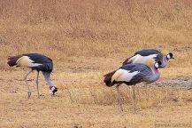Ngorongoro (13)