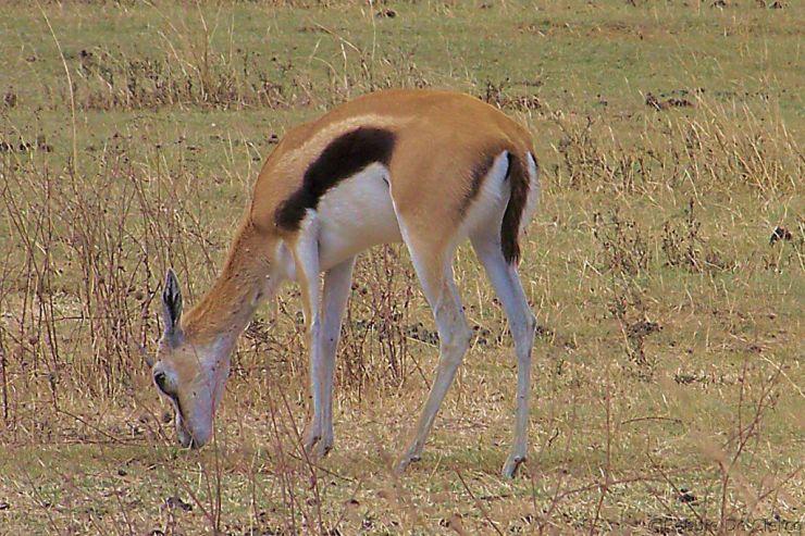 Ngorongoro (17)