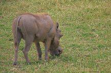 Ngorongoro (18)