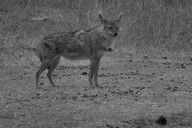 Ngorongoro (21)