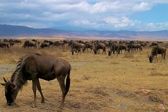 Ngorongoro (22)