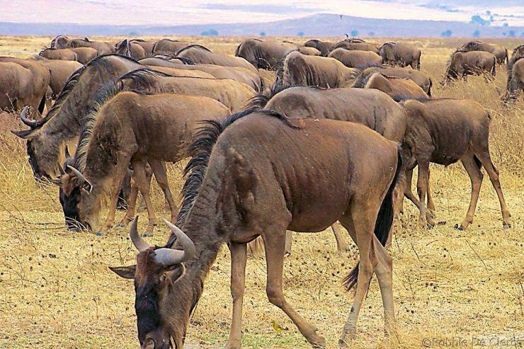 Ngorongoro (23)