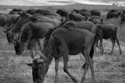 Ngorongoro (24)
