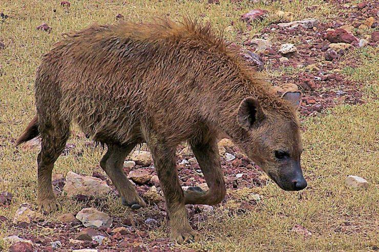 Ngorongoro (27)