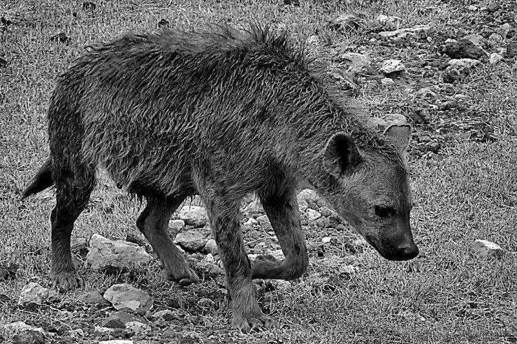 Ngorongoro (28)