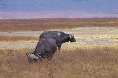 Ngorongoro (32)
