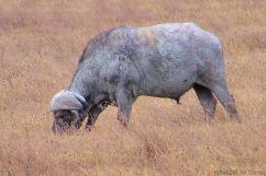 Ngorongoro (34)