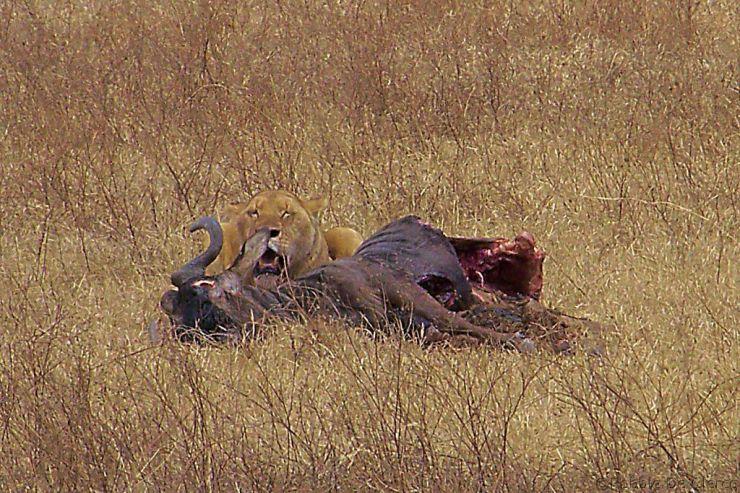 Ngorongoro (35)