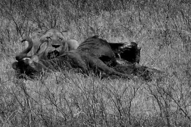 Ngorongoro (37)