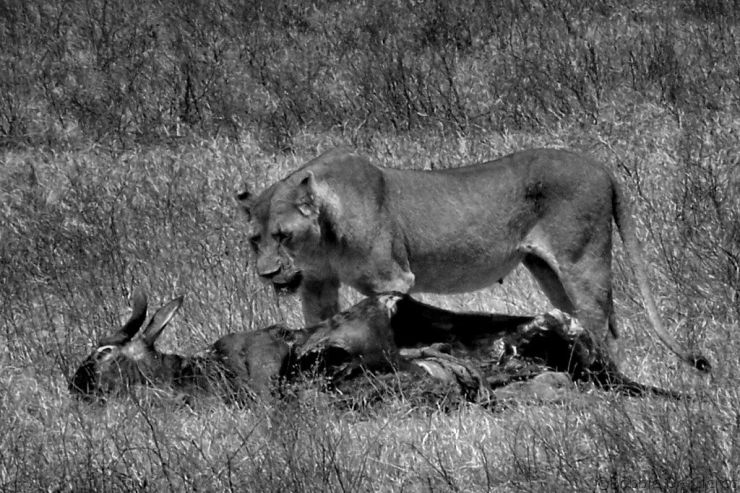 Ngorongoro (41)