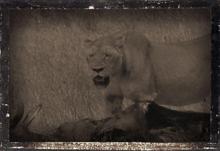Ngorongoro (42)