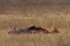 Ngorongoro (43)